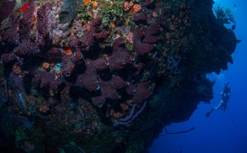 Dive with Cristian Dimitrius